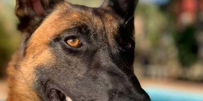 El 75% de los perros detectores de explosivos en carga aérea renueva su certificación