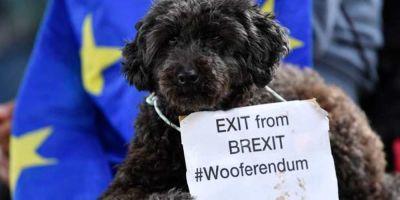 Multa y cárcel  en Reino Unido si no controlamos a nuestro perro