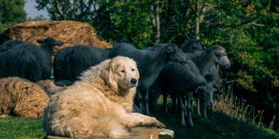 La Mesta, origen de las condenas por maltrato animal