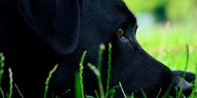Las mascotas se deben incluir en las órdenes de protección
