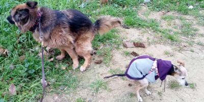 Un pequeño truco al mirar la caca de nuestro perro nos dice si está sano