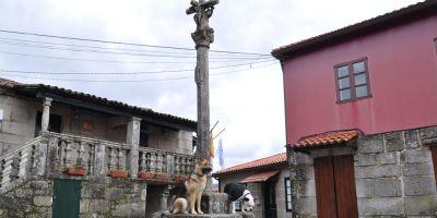 Camino de Santiago  con perro