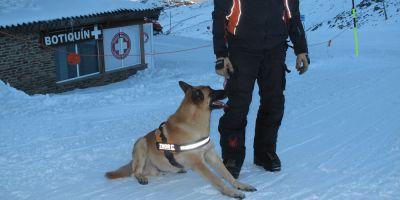 Escarbar bajo cero, el secreto del rescate con perro en avalanchas