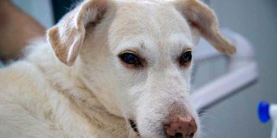 La salmonelosis también llega por los perros