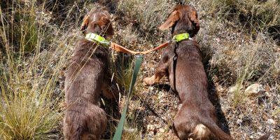 Los canes que siguen el rastro de sangre