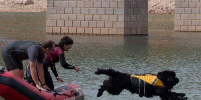 Terranova, el perro oso que salva vidas