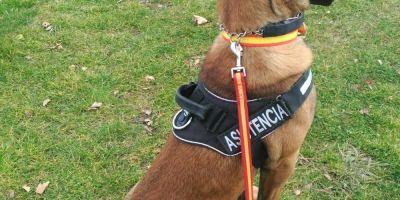 Los perros devuelven vida