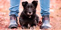 El perro, el mejor amigo  de la mujer (no del hombre)