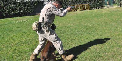 Unidades Caninas de las Fuerzas Especiales:  la élite del Ejercito