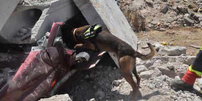 UME, los más selectos e inagotables perros de rescate