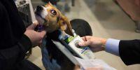 Los chips de los perros se actualizan: incorporarán todos los datos
