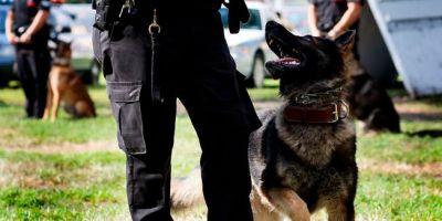 Perros K-9: nuevo objetivo de los narcos