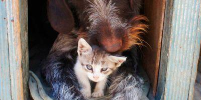 Llega un gato, ¿es posible que convivan?