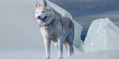 Perros y humanos van juntos desde la Edad del Hielo