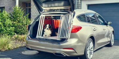¿Llevamos seguros a los perros en coche?