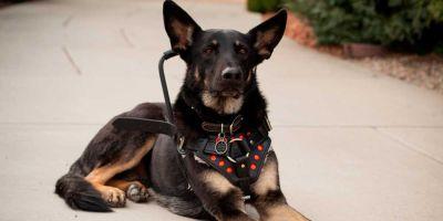 Una ONG facilita perros de equilibrio a personas con problemas de estabilidad