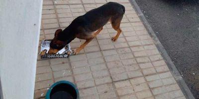 Maltrato animal, reflejo de la cascada de violencia  social actual