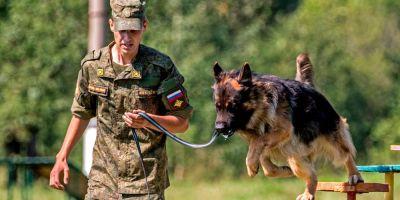 """Rusia vence en la """"guerra de perros"""""""