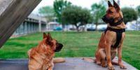La dejadez acaba con dos perros policías muertos en sus jaulas