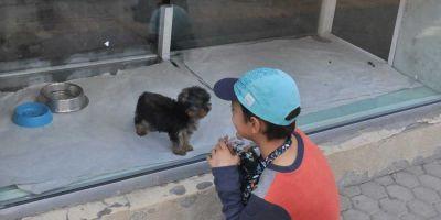 Los vendedores de perros tendrán que estudiar