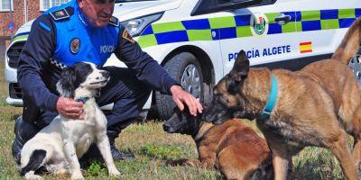 La Unidad Canina de la Policía Local de Algete amplía la familia con un macho de springer spaniel